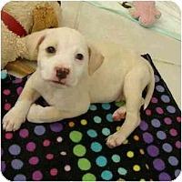Adopt A Pet :: Al - Phoenix, AZ