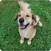 Adopt A Pet :: Mosche - Foster, RI