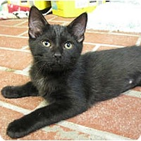 Adopt A Pet :: Dreamer - Centerburg, OH