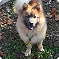 Adopt A Pet :: Sophie - Tucker, GA
