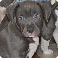 Adopt A Pet :: Chunk - Tumwater, WA