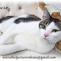 Adopt A Pet :: Gracie - Metairie, LA