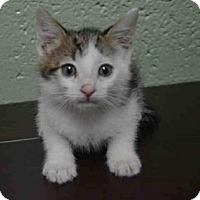 Adopt A Pet :: Spacey - New York, NY