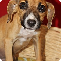 Adopt A Pet :: Webster - Waldorf, MD