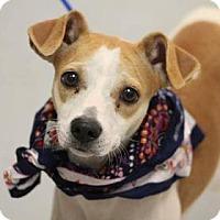 Adopt A Pet :: Raya - Lebanon, CT