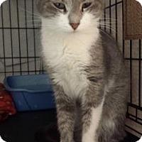 Adopt A Pet :: Peek - Fort Collins, CO