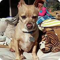 Adopt A Pet :: Dinky - Creston, CA