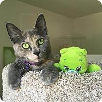 Adopt A Pet :: Video!Playful friendly MEADOW - Studio City, CA
