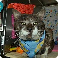 Adopt A Pet :: Yankee - Mebane, NC