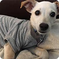 Adopt A Pet :: King - Oakley, CA
