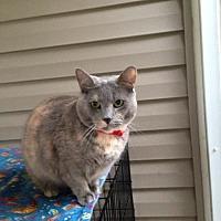 Adopt A Pet :: Lilac (IL) 2.14.10 - Orlando, FL