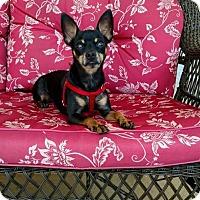 Adopt A Pet :: Sarge - Brooksville, FL