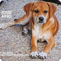 Adopt A Pet :: Josie - Spring, TX