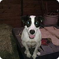 Adopt A Pet :: Lulu meet me 10/28 - Manchester, CT