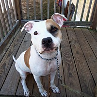 Adopt A Pet :: Dawn - Manchester, NH