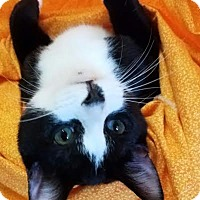 Adopt A Pet :: Tango - Colfax, IA