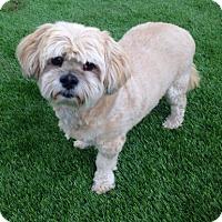 Adopt A Pet :: CP - Temecula, CA
