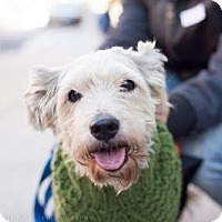 Adopt A Pet :: Shannon Purser - Brooklyn, NY