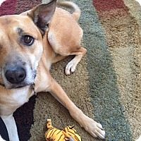 Adopt A Pet :: Riley (COURTESY POST) - Baltimore, MD