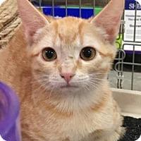 Adopt A Pet :: Alice - Irving, TX