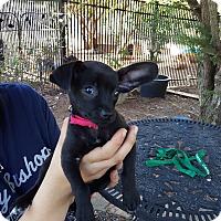 Adopt A Pet :: Nemo - Fayetteville, GA