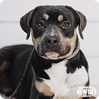 Adopt A Pet :: Cayenne - Portland, OR