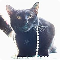 Adopt A Pet :: Rocky - Fredericksburg, VA
