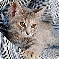 Adopt A Pet :: Delilah - Palmdale, CA