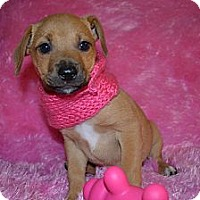Adopt A Pet :: Maggie - Cranford, NJ