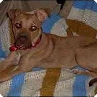Adopt A Pet :: Ophelia - Gilbert, AZ