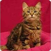 Adopt A Pet :: Norman - Sacramento, CA