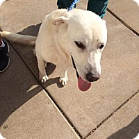 Adopt A Pet :: Whit - Oak Brook, IL