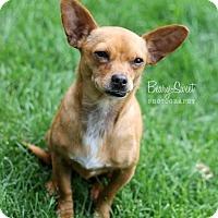 Adopt A Pet :: MILO - Chicago, IL