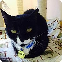 Adopt A Pet :: Iggie - Hudson, NY