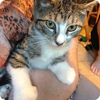 Adopt A Pet :: Sweetie Pie - East Brunswick, NJ