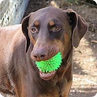 Adopt A Pet :: Matty (and Snoop) - Tracy, CA
