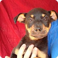 Adopt A Pet :: Casey - Oviedo, FL
