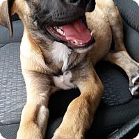 Adopt A Pet :: Rudy Wilson - Joliet, IL