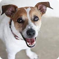 Adopt A Pet :: HOOTIE - Kyle, TX