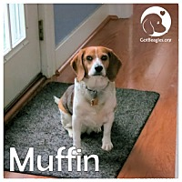 Adopt A Pet :: Muffin - Pittsburgh, PA