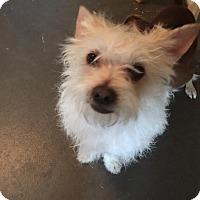 Adopt A Pet :: Scampy - Lodi, CA