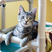 Adopt A Pet :: Houston - Fargo, ND