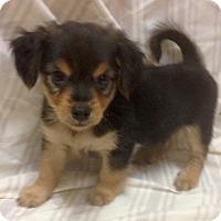 Adopt A Pet :: Wrangler (ARSG) - Santa Ana, CA