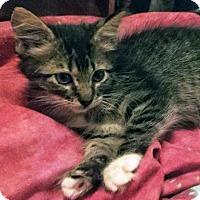 Adopt A Pet :: Kolleen - Austin, TX