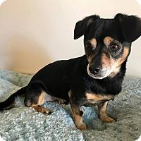 Adopt A Pet :: Fido - San Diego, CA
