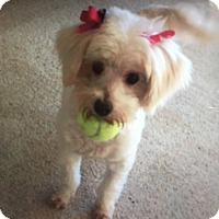 Adopt A Pet :: Maggie - Hollywood, CA