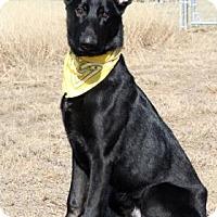 Adopt A Pet :: Kaiser - Norman, OK