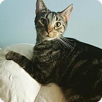 Adopt A Pet :: Shamus - Taylorsville, IN