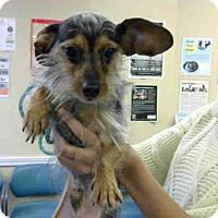 Adopt A Pet :: BRIX - Louisville, KY