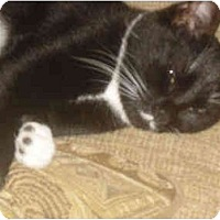 Adopt A Pet :: Stache (DS) - Little Falls, NJ